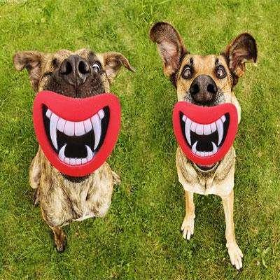 игрушка-для-собак