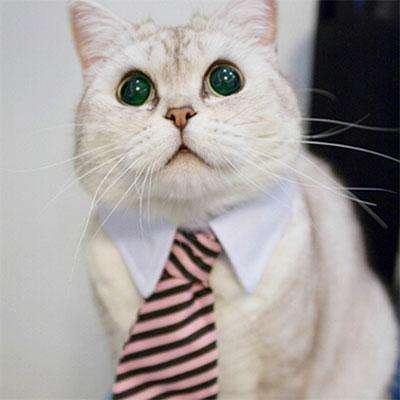 галстук-для-кота